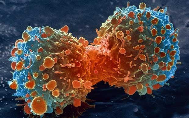 Divisão de células anormais