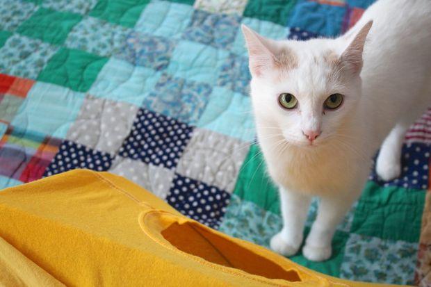 O gato e a tenda.