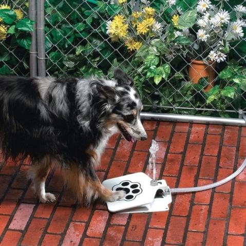 Bebedor para cães.