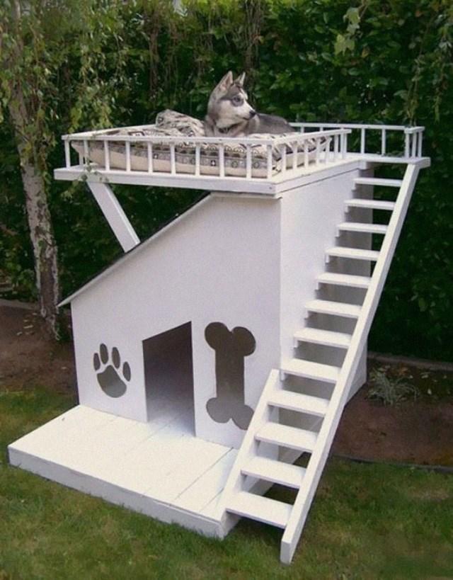 A casa dos sonhos de qualquer cachorro.
