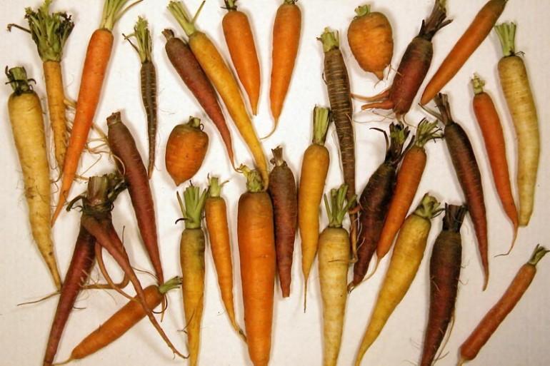A cenoura faz tão bem pra vista mesmo?