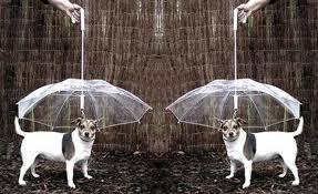 Coleira prefine cachorro de ficar molhado da chuva.