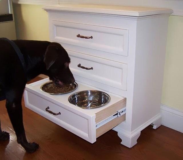 Cachorro comendo na sua cômoda.
