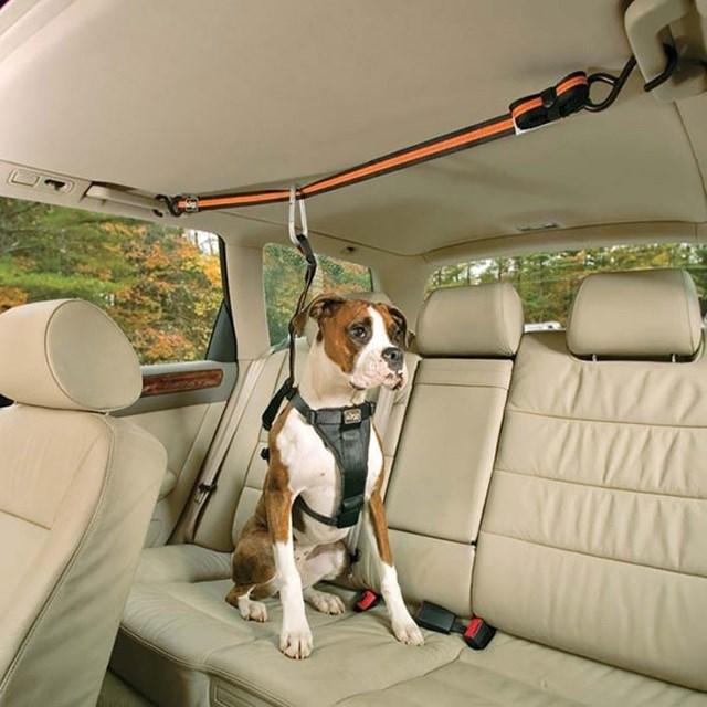 Fita de segurança para cachorro.