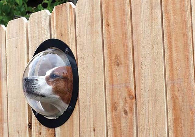 Olho mágico para cachorros.