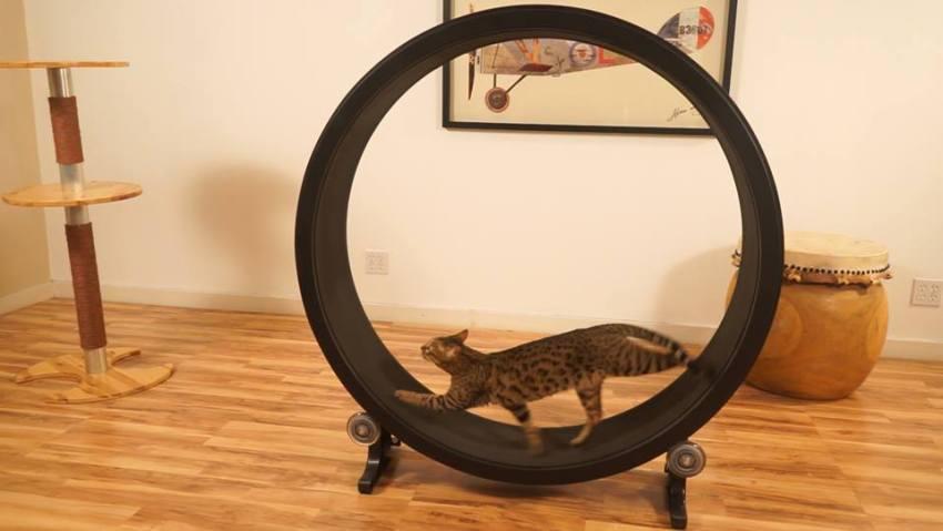 Roda de exercícios para gatos.