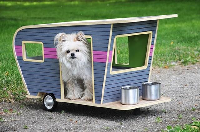 Cachorro no seu trailer.