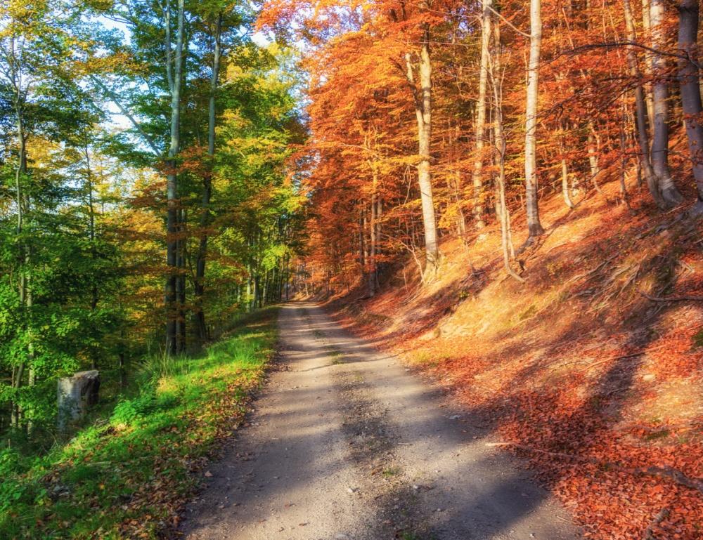 bosque 2 cores