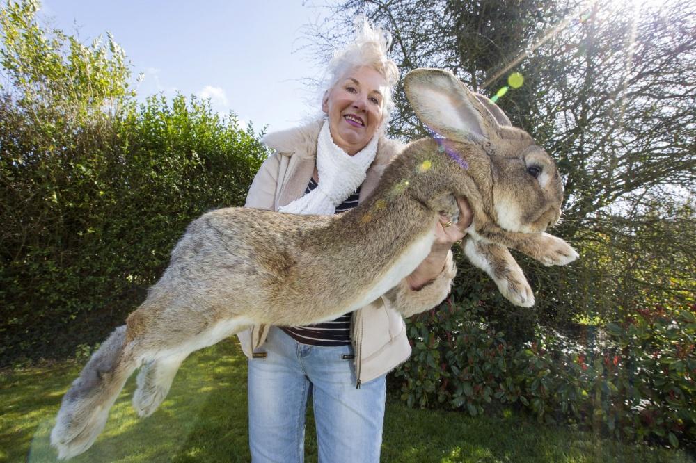 Darius o coelho.