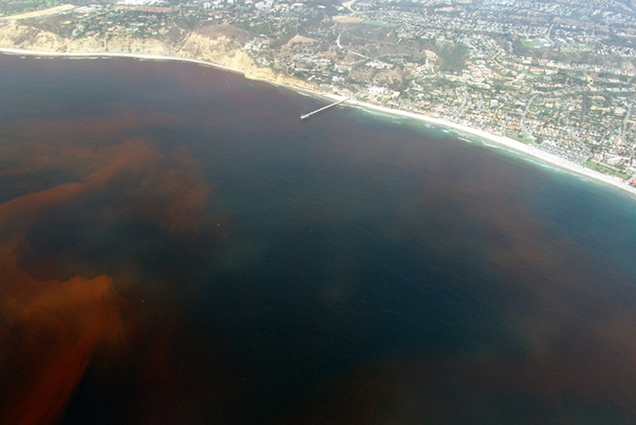 """""""Mare vermelha"""" como é chamado os locais onde essa alga se desenvolve."""