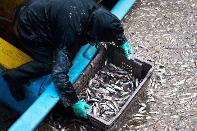 Retirando os peixes mortos da água