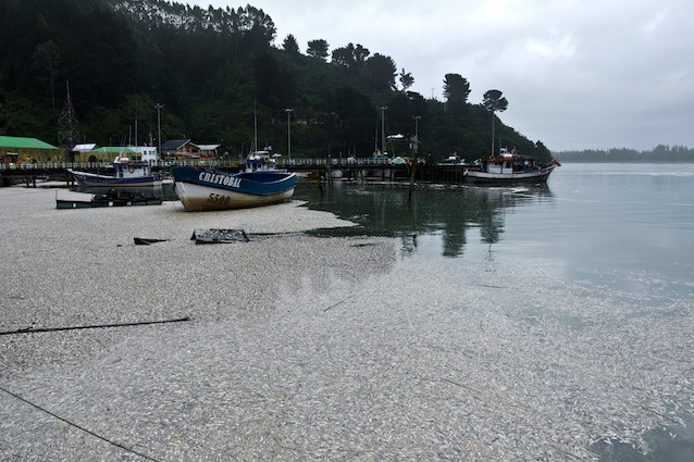 Próximo a praia - Muitas sardinhas mortas