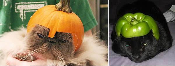 gato-abobora-pimentao