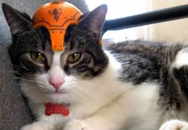 gato-capacete-medieval
