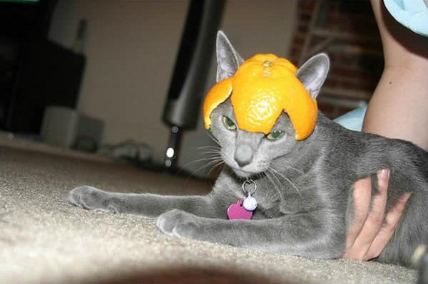 gato-capacete-mixirica-3