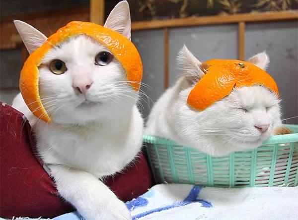 gato-capacete-mixirica-4