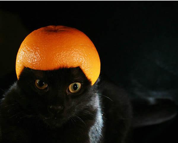 gato-capacete-mixirica-5