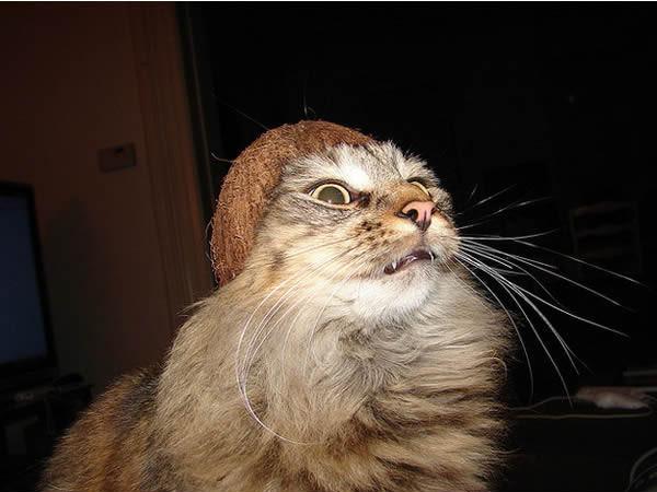 gato-coquinho-2