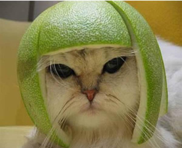 gato-iron-man