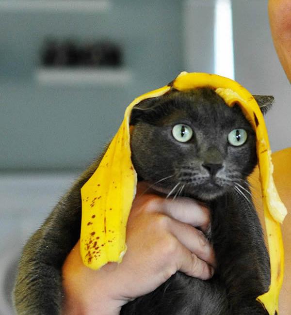 gato-loira-banana