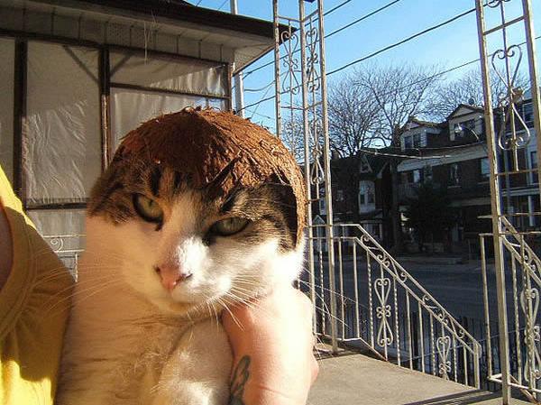 gato-penteado-coquinho