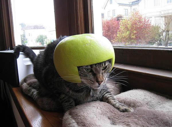 gato-penteado-verde-2