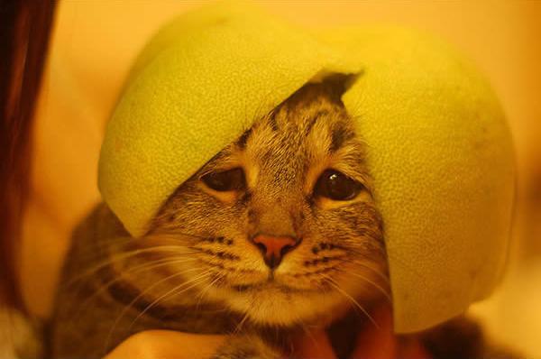 gato-penteado-verde-3