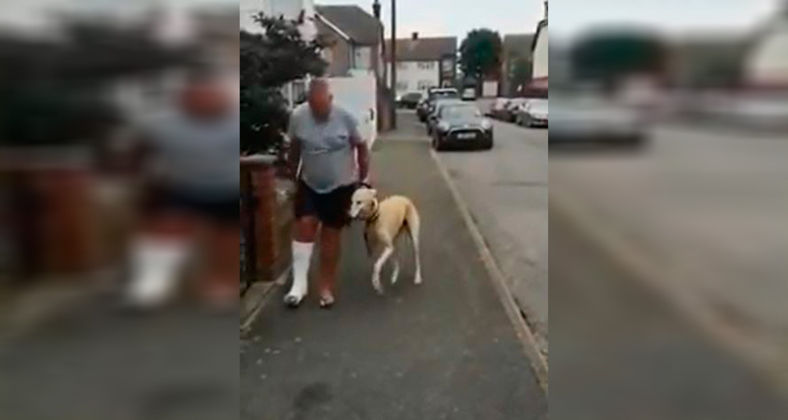 Cachorro imitando