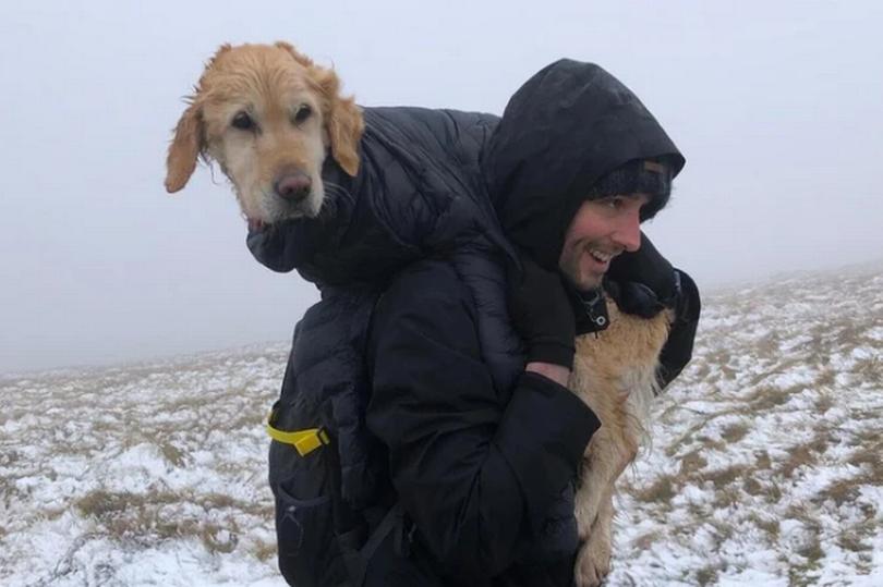 Cachorra Neesha resgatada