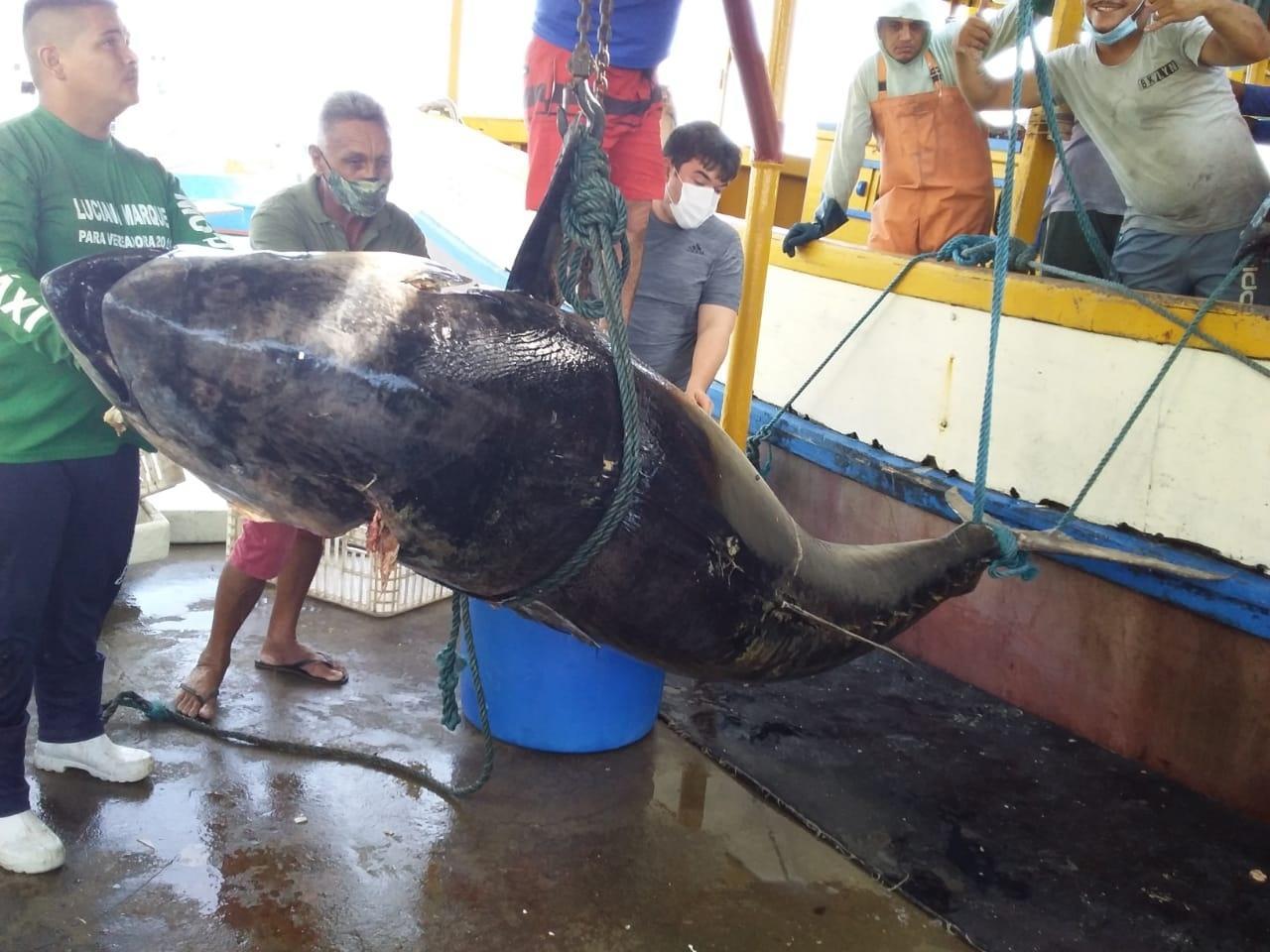 Atum avaliado em 140 mil foi pescado no RN